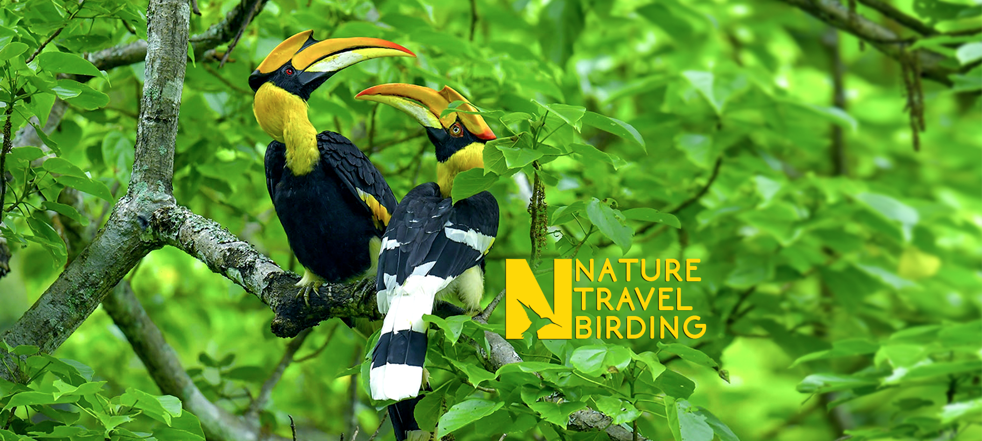 Nature Travel Birding